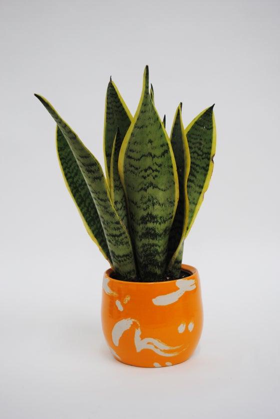 Image of Deco Dance Plant Pot Orange