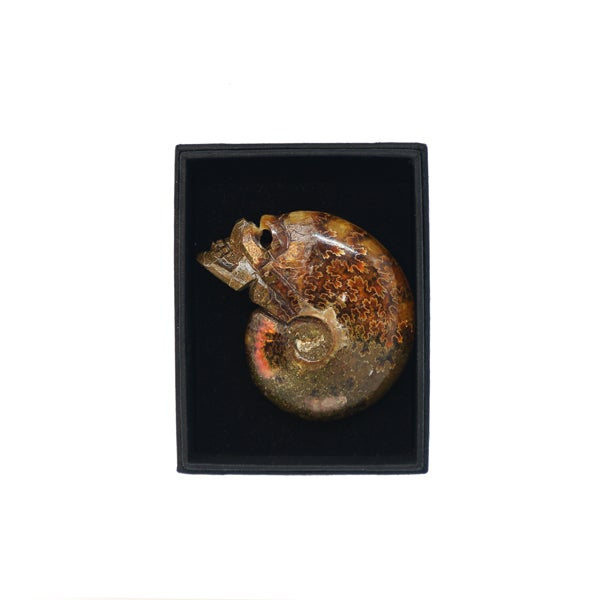 Image of Ammonite skull carving box