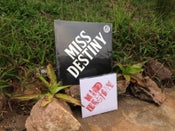 Image of Miss Destiny Starter Pack $25 Postage Paid in Australia!