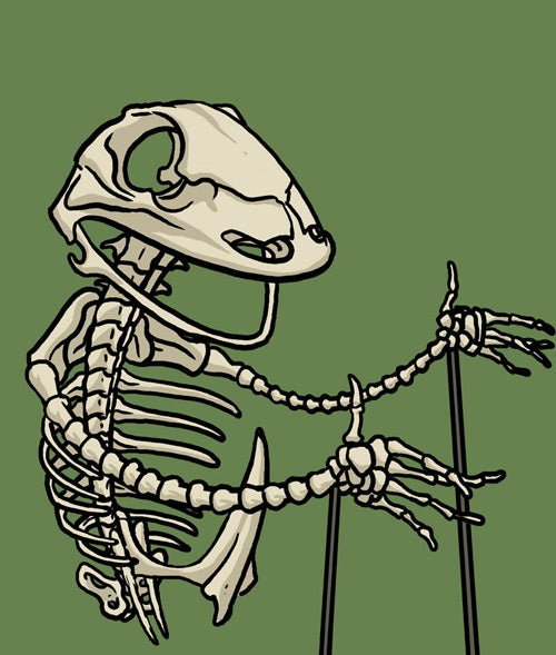 Image of Kermit skeleton