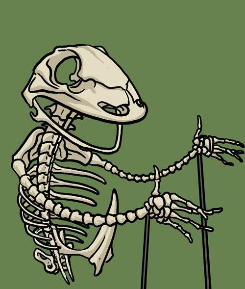 Image of Kermit skeleton