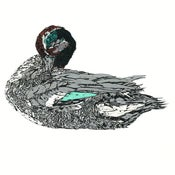 Image of Duck