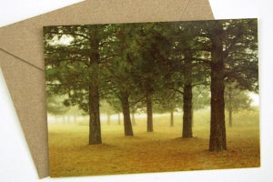 Image of Five Trees Postcard w/Envelope - Boise National Forest