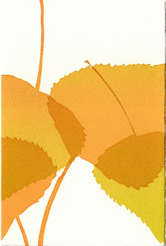 Image of Yellow leaves