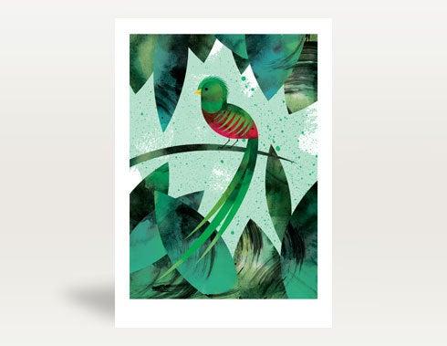 Image of Quetzal