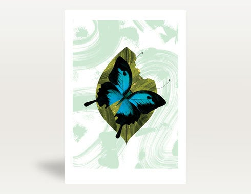 Image of Ulysees Butterfly