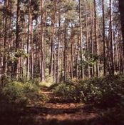 Image of South-Bohemian forests II