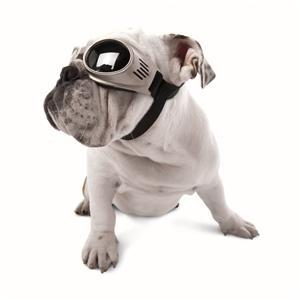 Image of Doggles Originalz in the category  on Uncommon Paws.