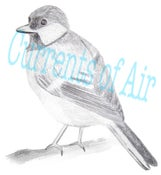 Image of Bird: Art for your Blog / Banner- get it within 24hrs