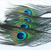 "Image of SALE! Peacock Feathers 10-12"" Pack of 10 (buy 5 packs get 1 free)"