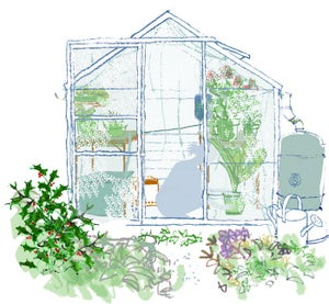 Image of Winter greenhouse