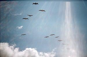 Image of .flight.