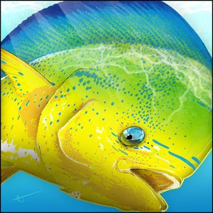 Image of Mahi Mahi | FishEyez