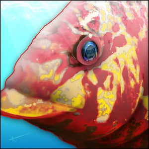 Image of Hog Snapper | FishEyez