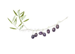 Image of Olives Limited Edition Print. 2012 Entry in the Royal Watercolour Society Competition.