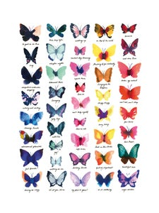 Image of Butterfly collection