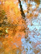 Image of Reflections 3 - 8x10in Photograph