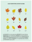 Image of Leaf Identification Guide