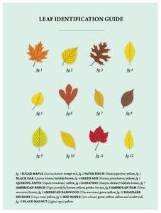 Image of Leaf Identification Guide