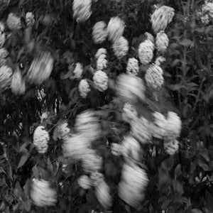 Image of Flowers on the move