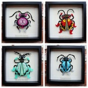 Image of Framed Beetle Commissions