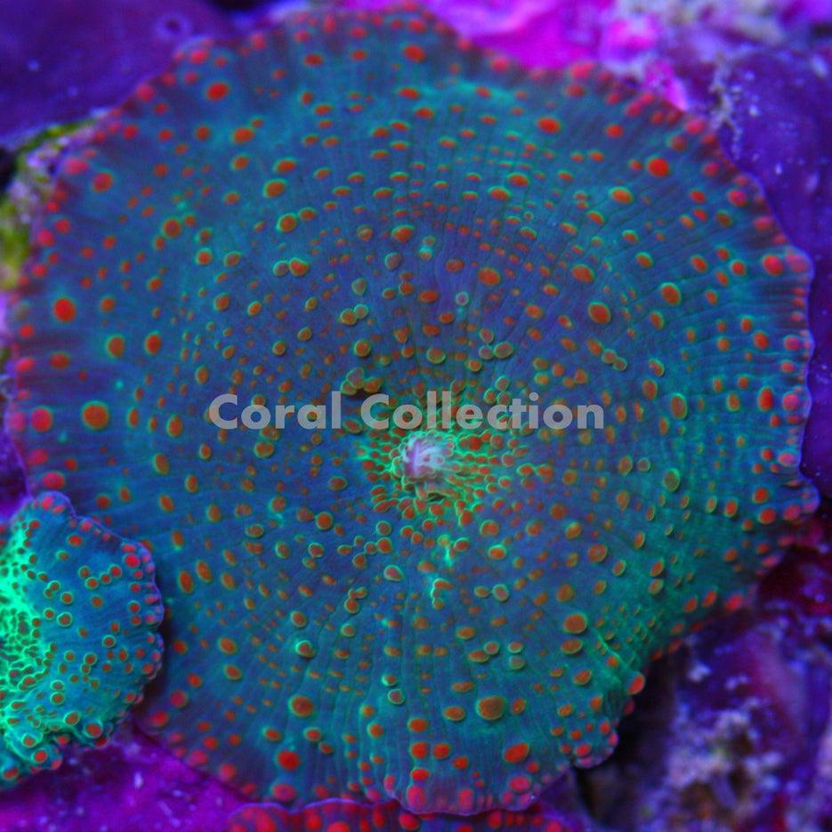 neon green mushroom wallpaper click to view auto design tech