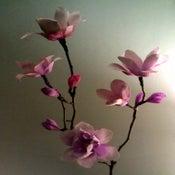 Image of Magnolias