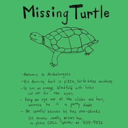 Image of Missing Turtle