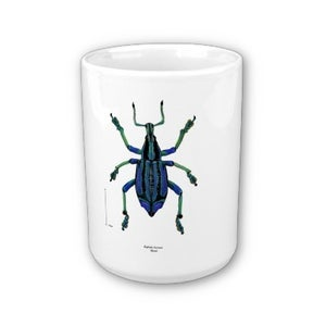 Image of Scientific Illustration insect MUG for the beetle lover!