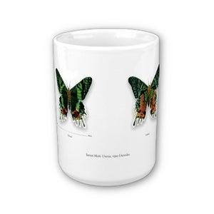 Image of Scientific Illustration MUG of a Sunset moth!
