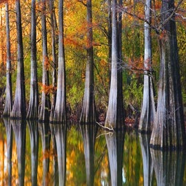 """Image of """"Cypress Reflections"""" - 3872"""