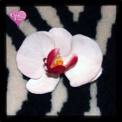 Image of White Orchid Hair Clip