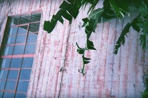 Image of .spiraling leaves.
