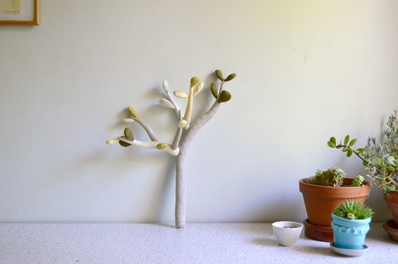 Image of Jade plant (Last one!) -30%