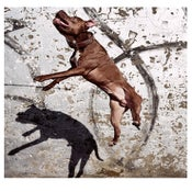 Image of PIT BULL BALLET no.1 - By Josh Cole