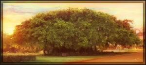 Image of MacArthur's Majesty   Landscapes