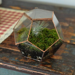Image of Universe Terrarium Kit, hinged