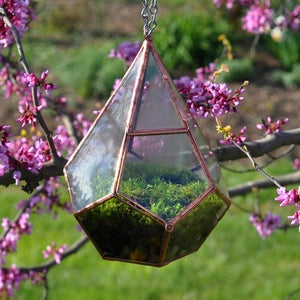 Image of Teardrop Terrarium Kit, medium hinged