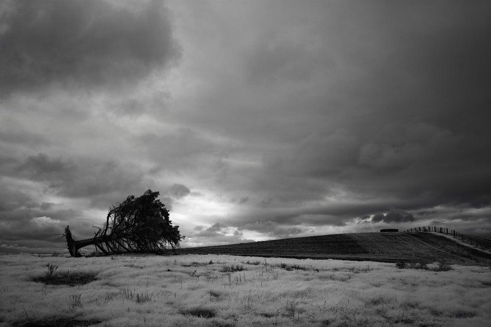 Image of Dead Tree