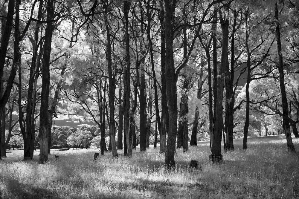 Image of Highlands, Victoria