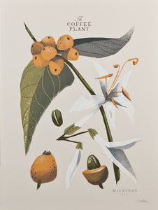 Image of The Coffee Plant (Detail) - Open Edition