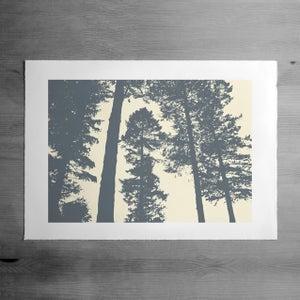 Image of Silverwood 3 print
