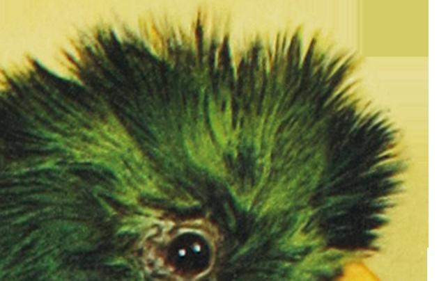 Image of De Cassagnac badge