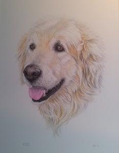 Image of Animals & Pet Portraits Original Art