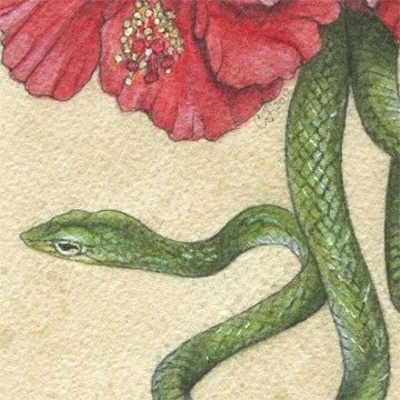Image of Oriental Whipsnake & Hibiscus
