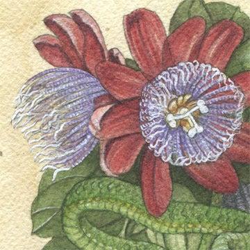 Image of Green Vine Snake & Passionflower