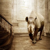 Image of Astor Hall Rhino