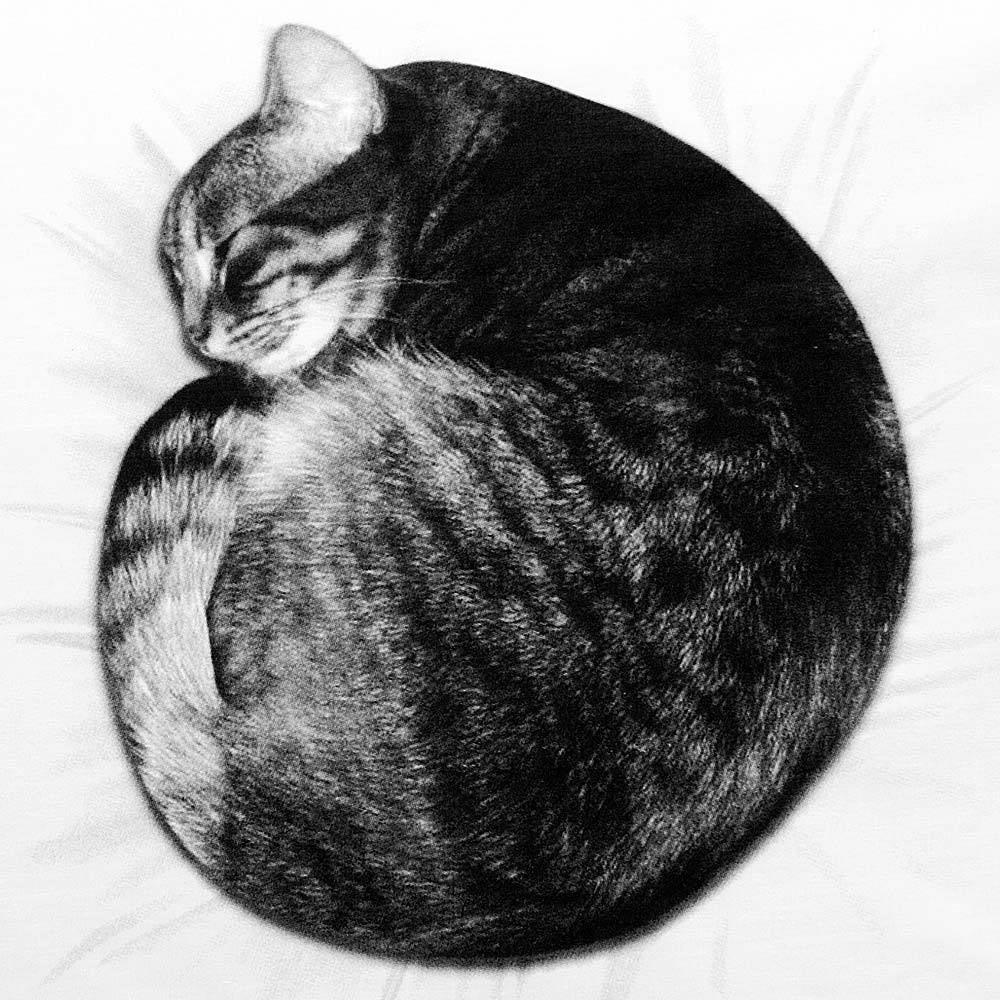 Image of Cat Nap — Pillowcase