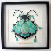 Image of Crimp Frilled Kayamori Kicking Beetle