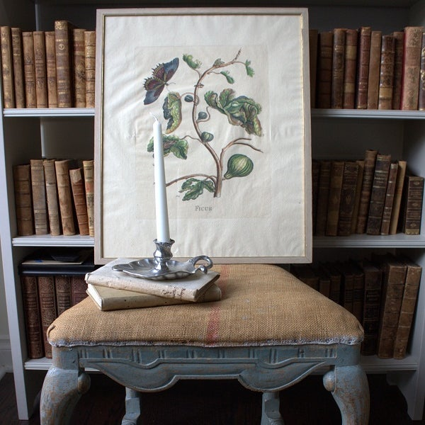 Image of Old Swedish Botanical Engraving (Framed)